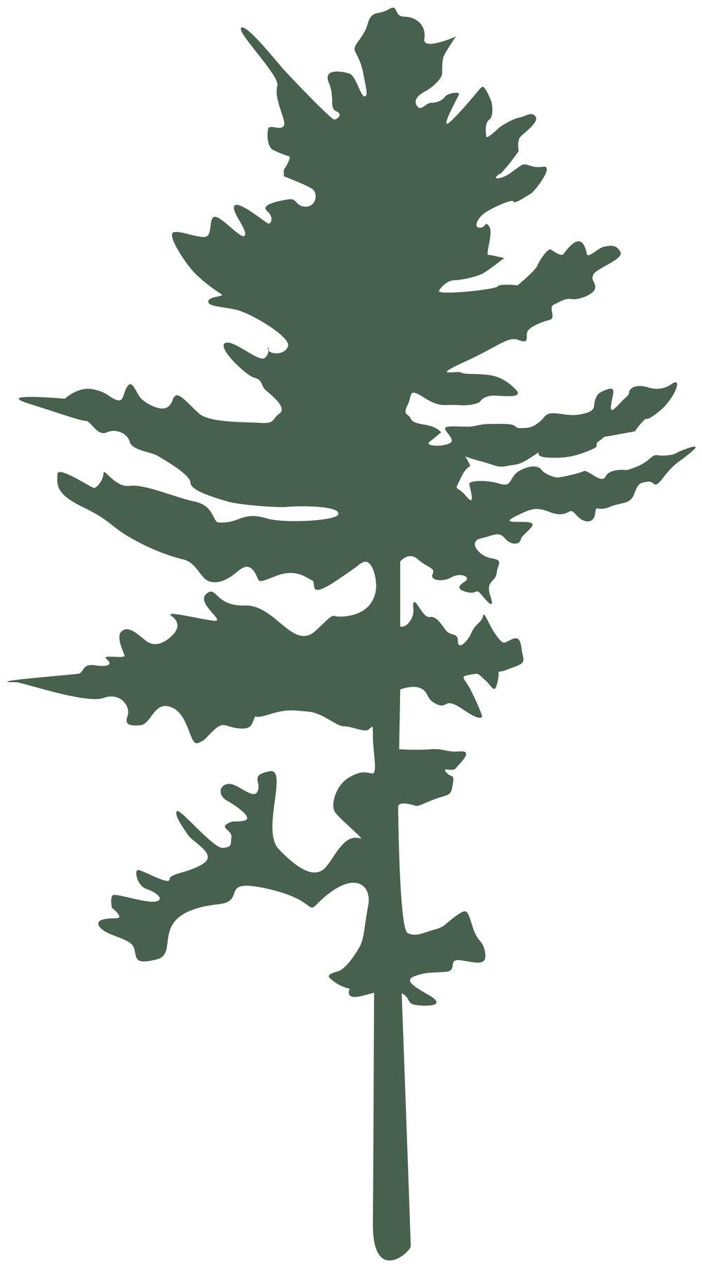 pine-header.jpg