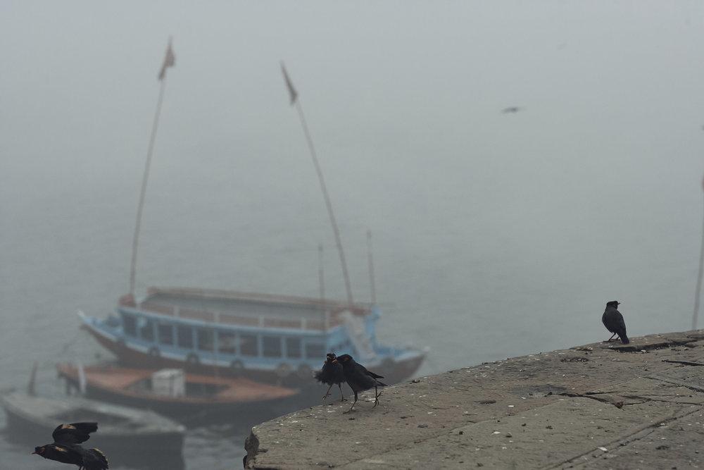 India0105.jpg