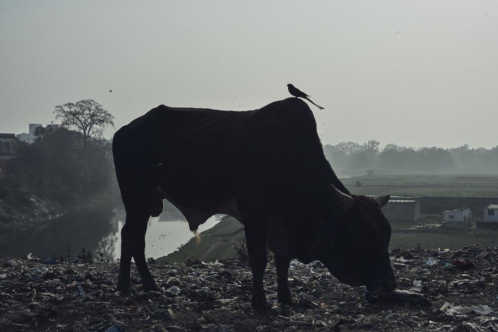India0352.jpg