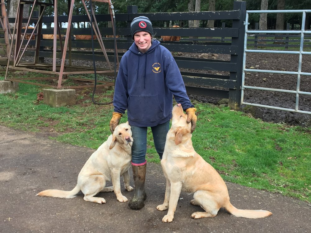 The Dogs - We have two farm dogs, Abby and Palmer.  Our yellow lab dogs help us around the farm but mostly like to play with each other and swim in any body of water they can find.  If you visit us on the farm, get ready for a lot of love from Abby and Palmer.