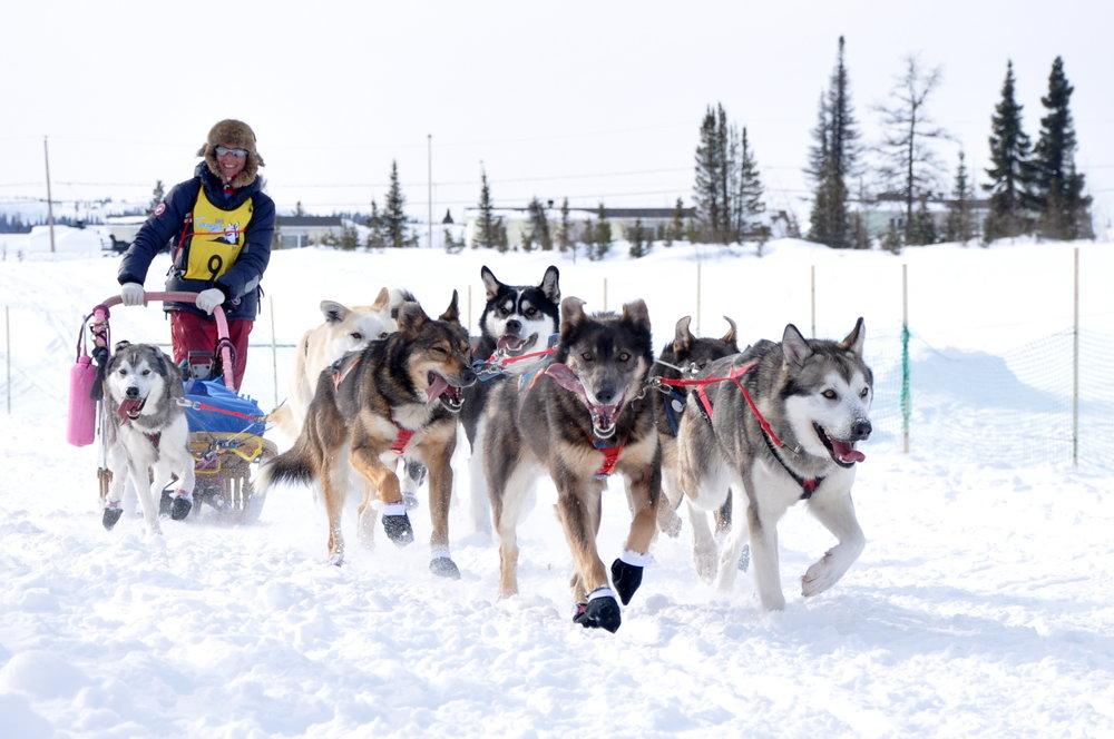 Mushers édition 2014 - Liste des mushers participants à l'édition 2014 du Défi Taïga