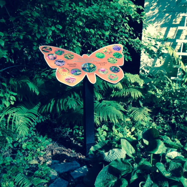 butterfly.1.jpg