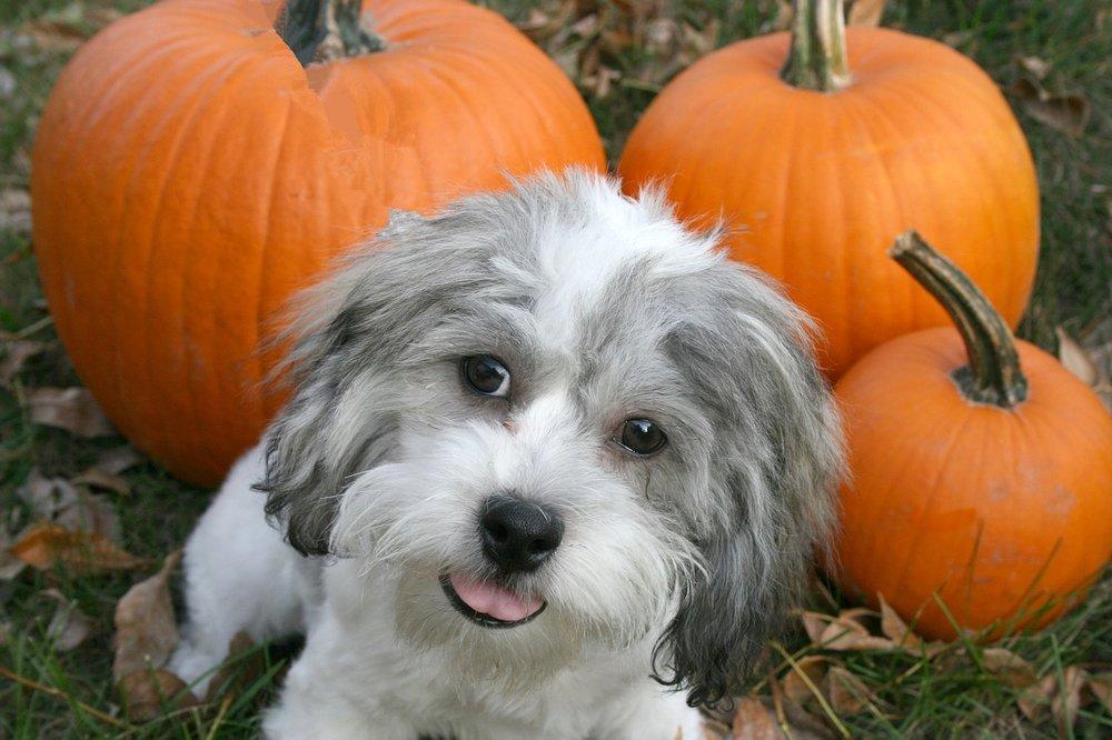 puppy-2645461_1280.jpg