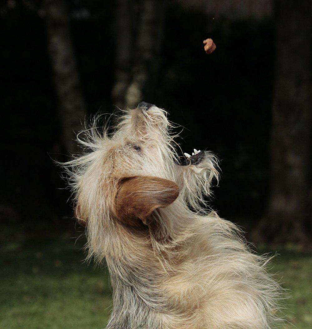 dog-403020_1280.jpg