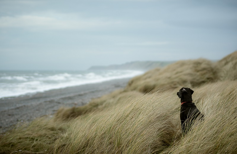 The foreground interest of the dog, combined with a wide aperture and long focal length, adds a real sense of depth to this scene and transports the viewer into the image.