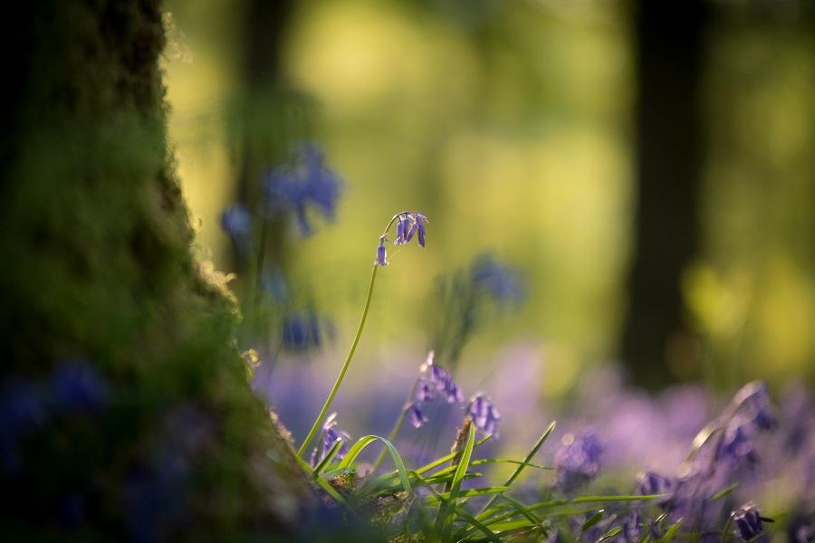 spring-landscape-photography-flowers.jpg