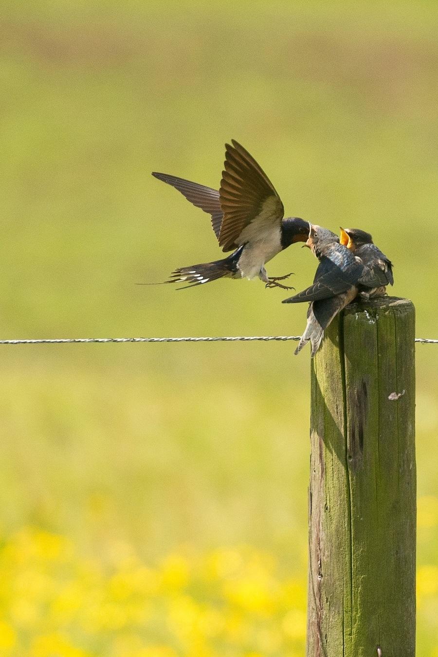 bird photography spring tips