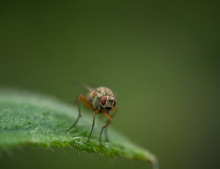 insect photography tips and tricks