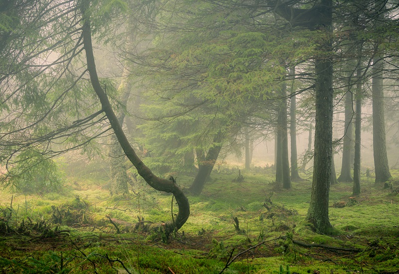 Mist helps to simplify an otherwise chaotic woodland scene into something more manageable and atmospheric.
