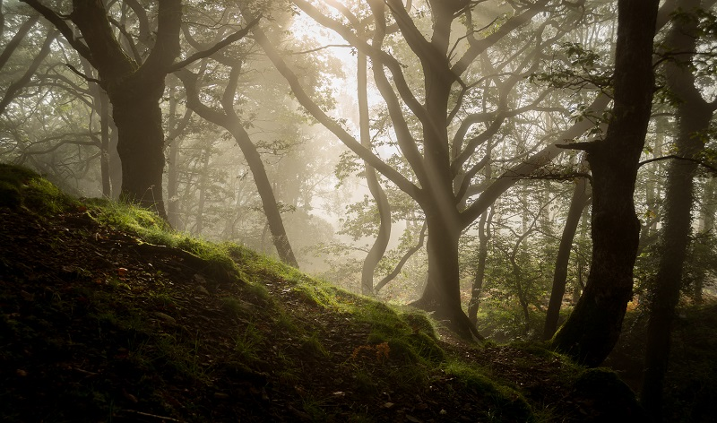 Backlight, especially when combined with mist, can result in strikingly dramatic woodland scenes.