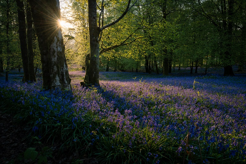 The elongated shadows in the dawn light enhances both the depth and atmosphere of this gorgeous spring morning.