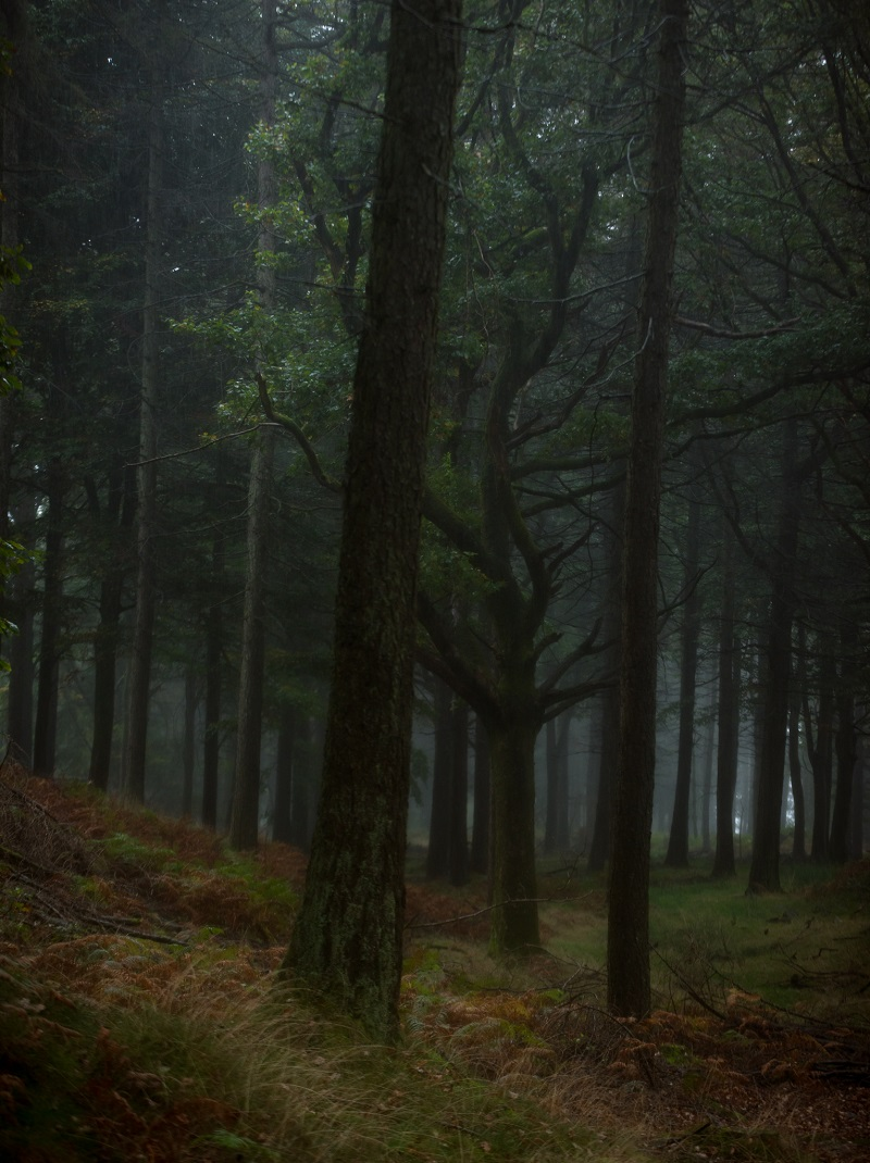 This was taken on one of the wettest mornings I've ever been out shooting in, and the rain softened the colours in addition to adding a sense of mystery to the image.