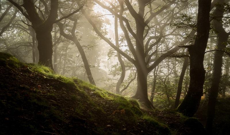 landscape photography tips mist