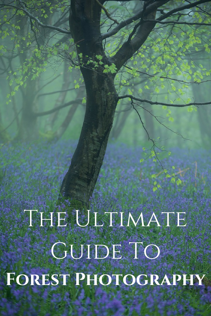 Pin our Ultimate Guide to Forest Photography here!