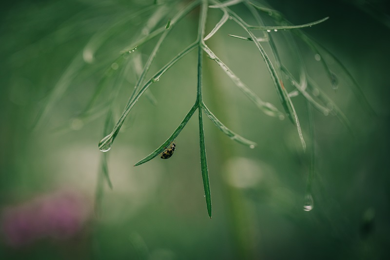 Combining a wide aperture with raindrops can create some beautiful bokeh for macro photography.