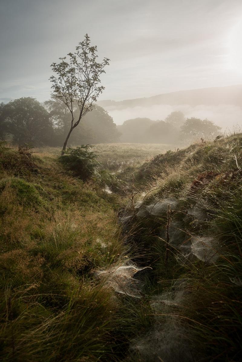 autumn photography mist