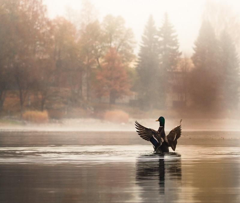 autumn photography wildlife