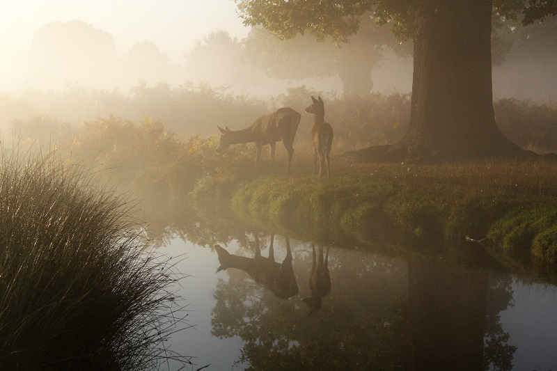 autumn photography deer wildlife tips