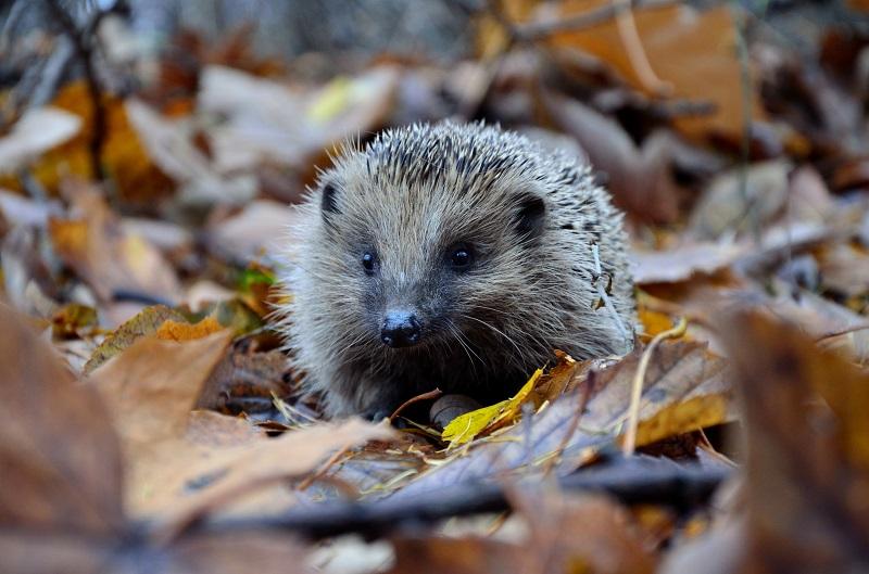 autumn photography wildlife tips