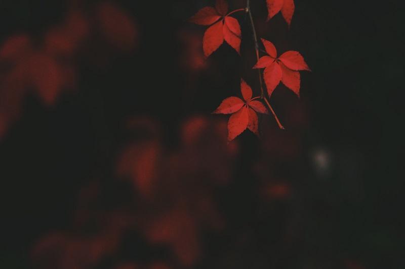 autumn macro photography tips