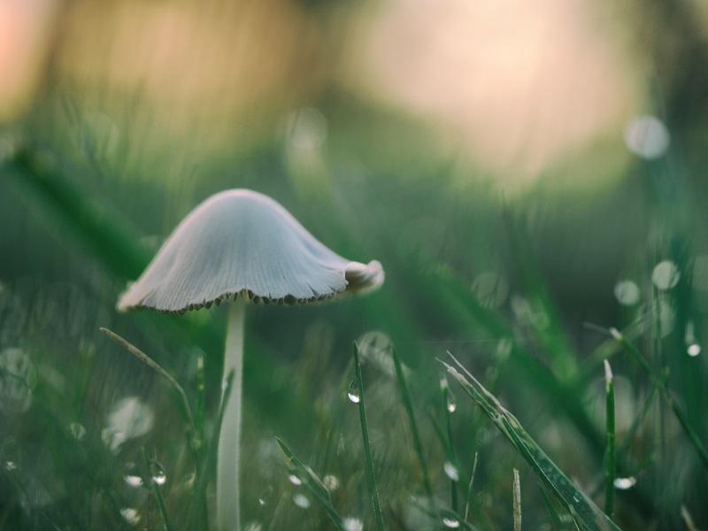 autumn photography mushroom