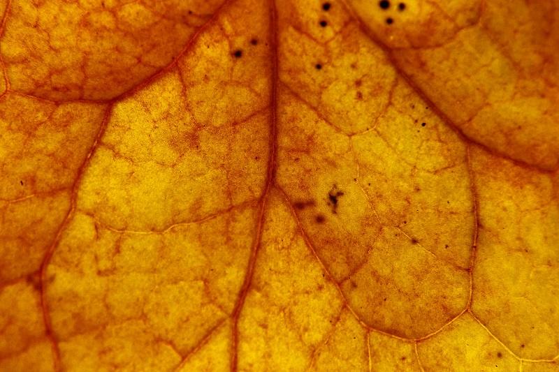 autumn photography macro