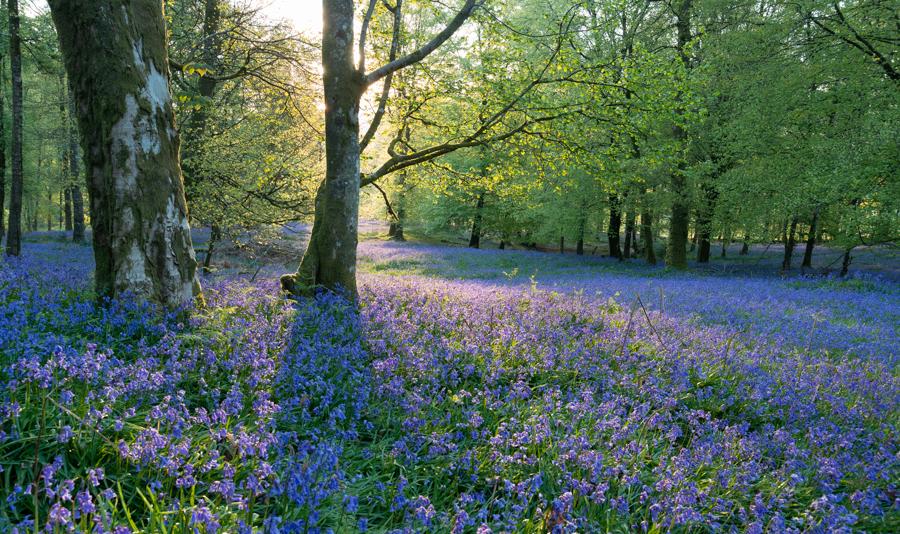 springflowersbefore.jpg