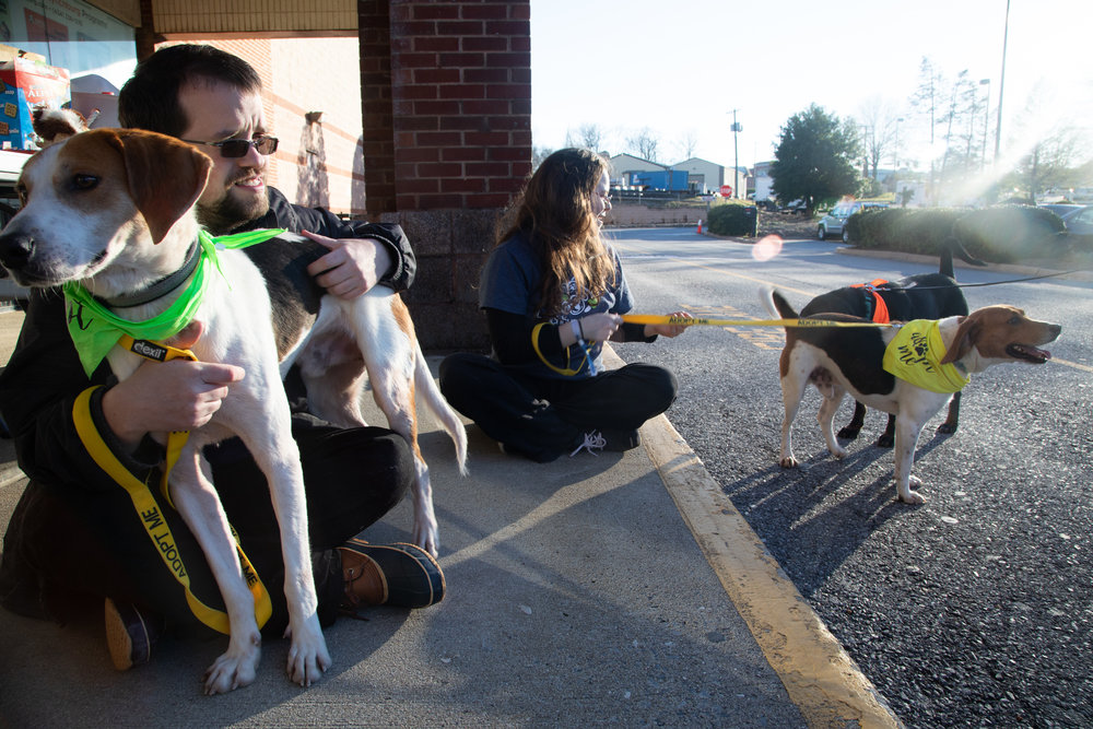 "Appomattox County Pet Center staff care employees Marina Reid and Andrew Liedtke introduce adoptable dogs to potential future owners on Monday Feb. 25, 2019 outside of Jump Lynchburg Trampoline Park. Today the park partnered with the Appomattox County Pet Center for a special event ""Jump For Joy"" with adoptable dogs and a discounted jumping fee."