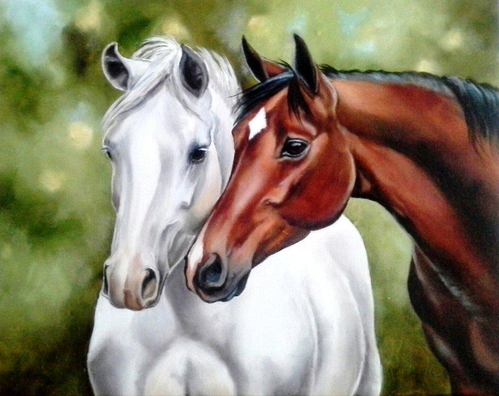 Equine Friendship.jpg