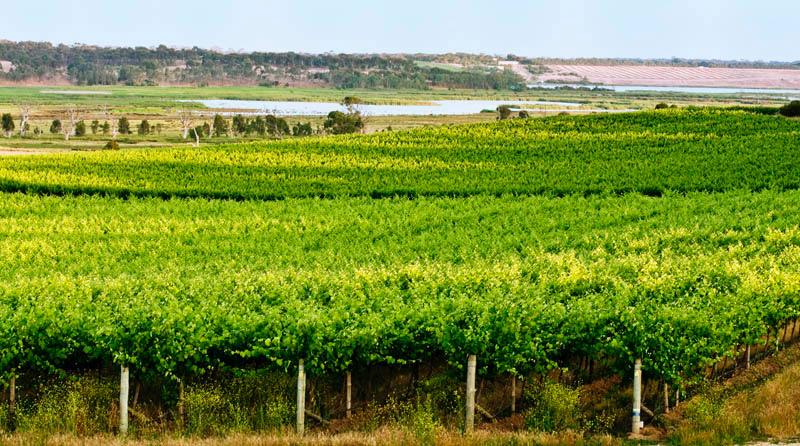 It all starts in the magical vineyards of South Australia...