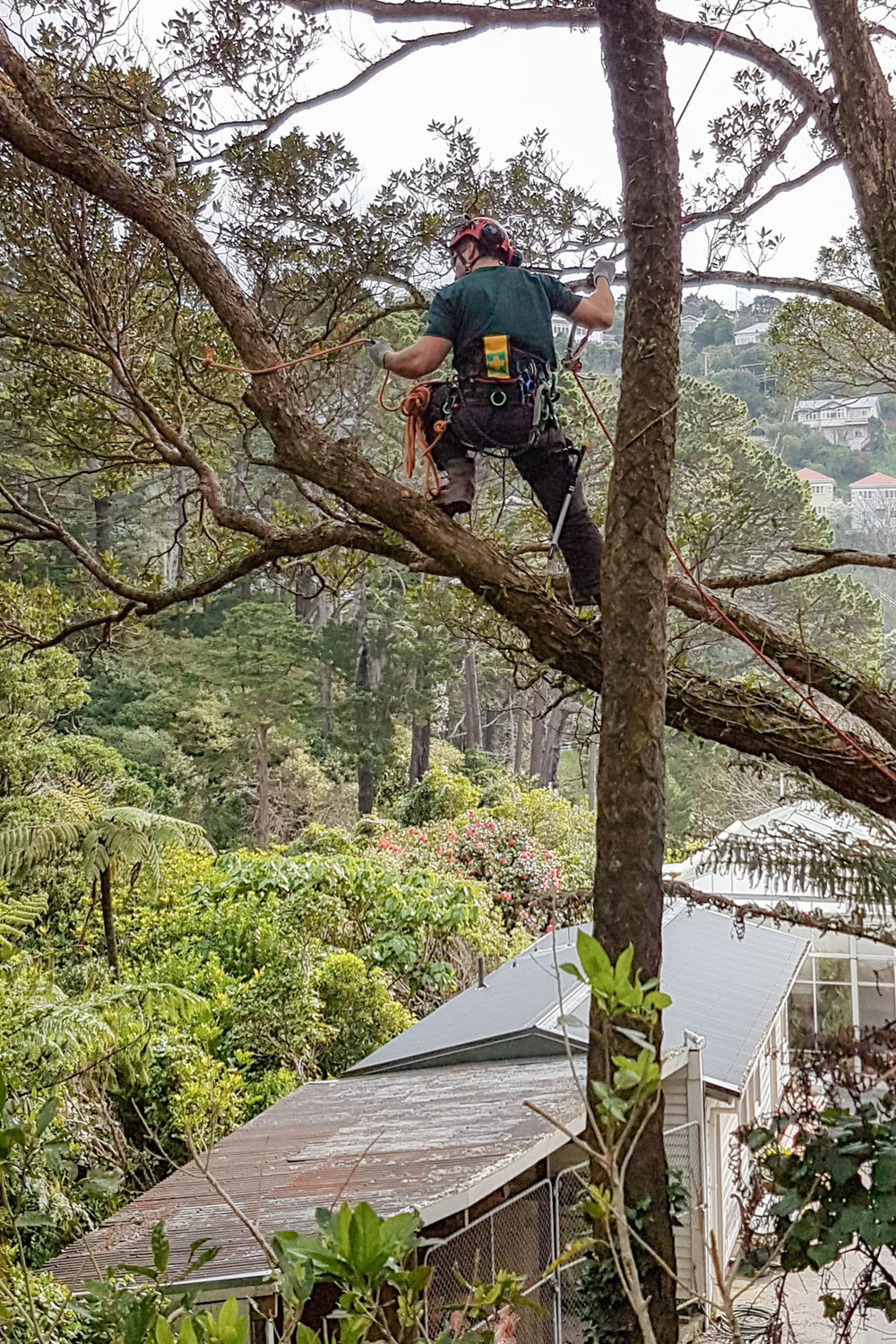 Josh Symes - Arboriculture Provides Winning Career Path For Josh