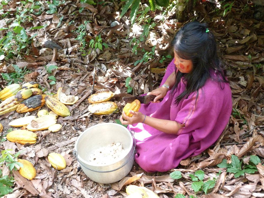 Ashaninka Girl Chopping Cacao.JPG