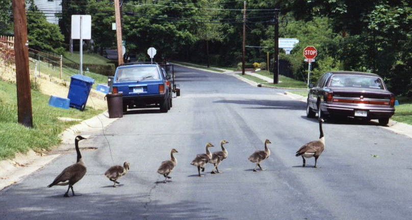 stopping traffic on McComas Ave.jpg