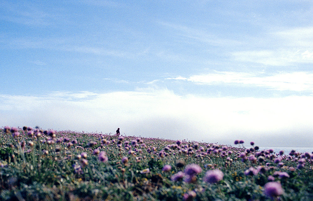 Maximilla among the flowers by the ocean.jpg