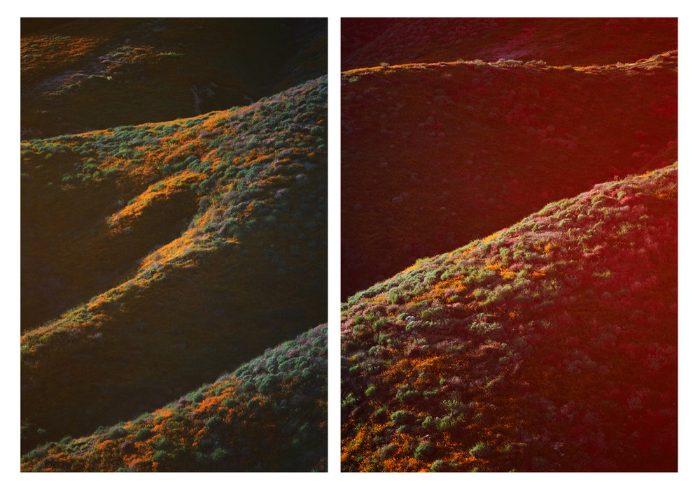 Walker Canyon diptych_poppies.jpg