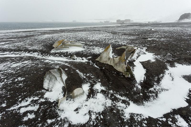 Whale Bones. Deception Island, Antarctica