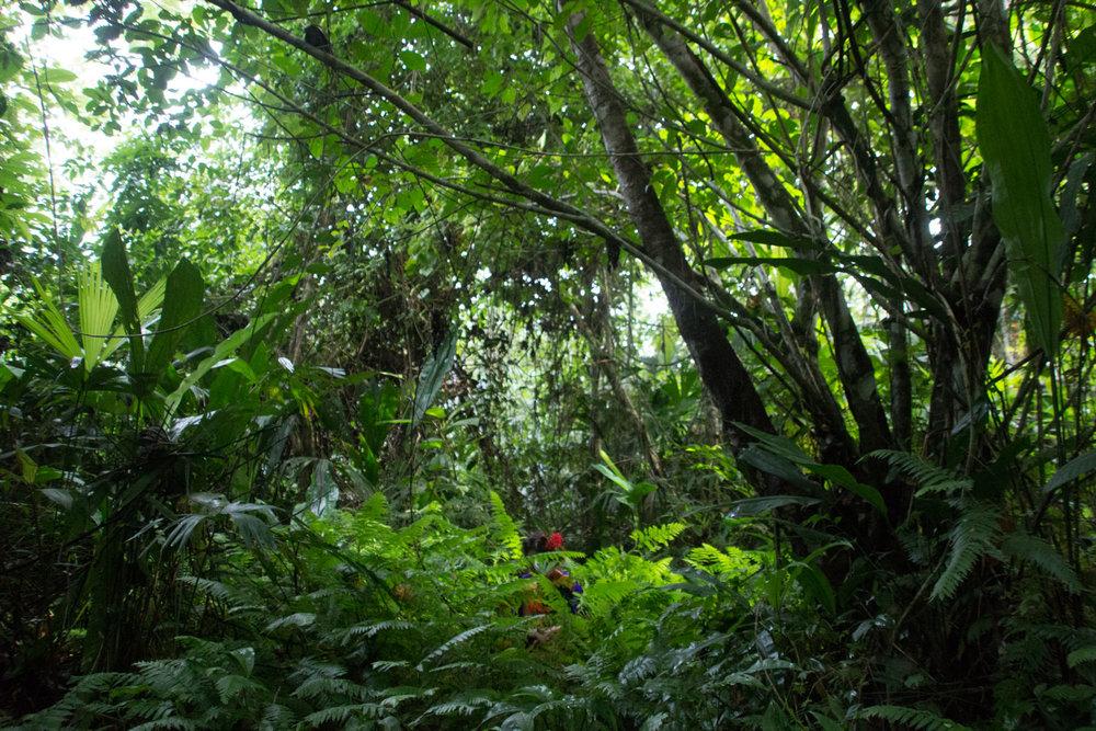 Tropic 8°N / Guna Yala, Panama. Located at the gateway between South and Central America in The Guna Yala National Park. In collaboration with the Tribal Congress of Guna Yala.
