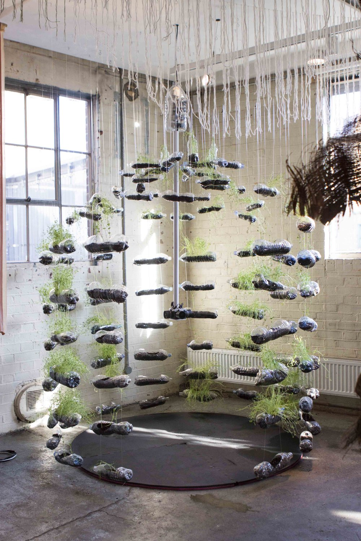 MICRO BEING, Tasha Aulls,  2018. Living plant installation
