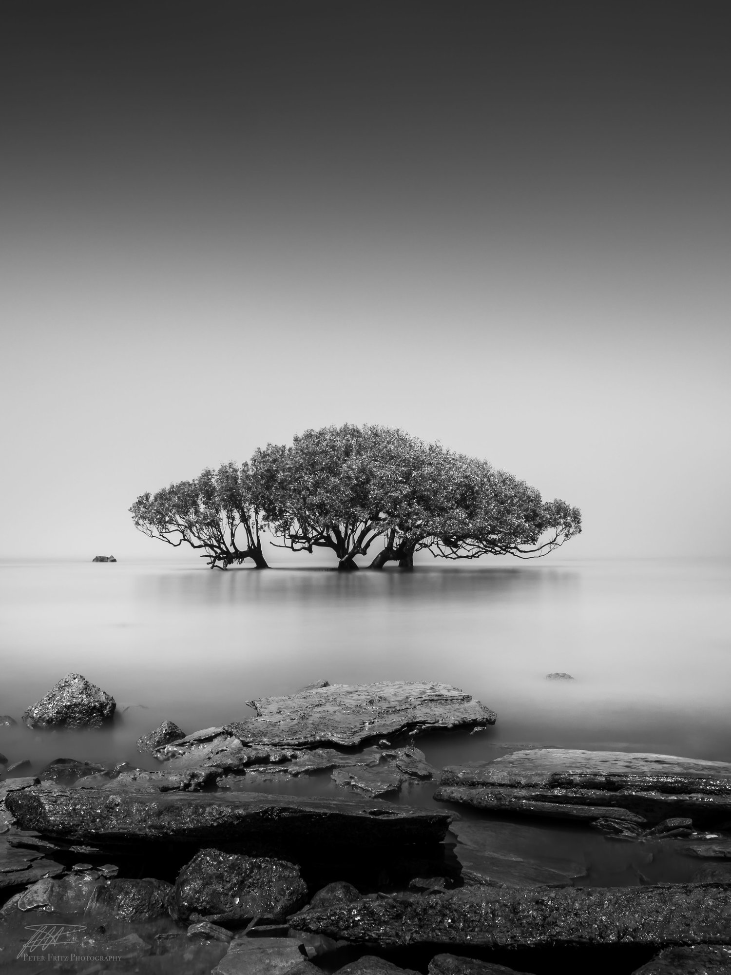 Alone in the fog bnw peter fritz black and white landscape photography