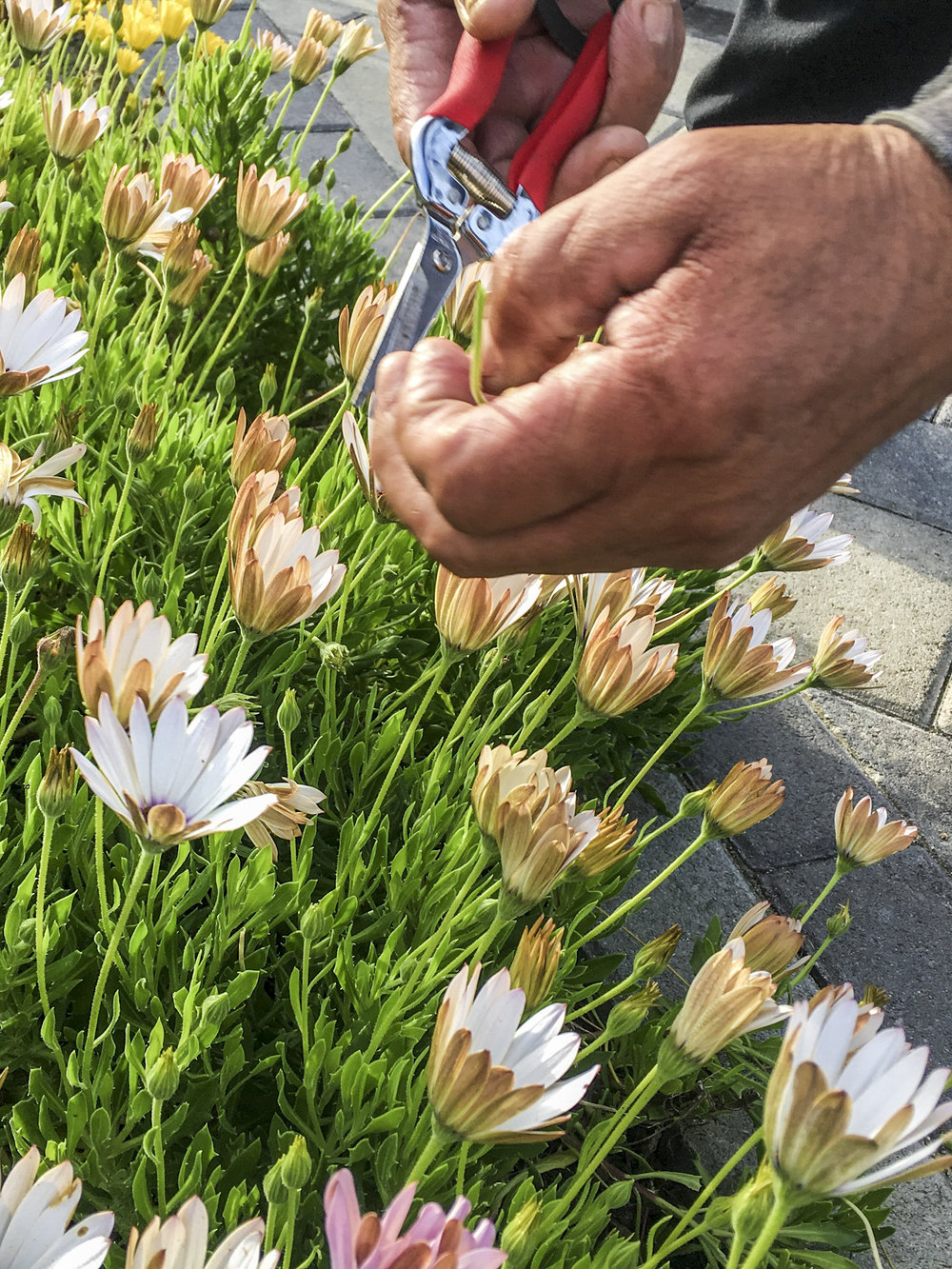 california_garden_roberto_flores_buck_09.jpg