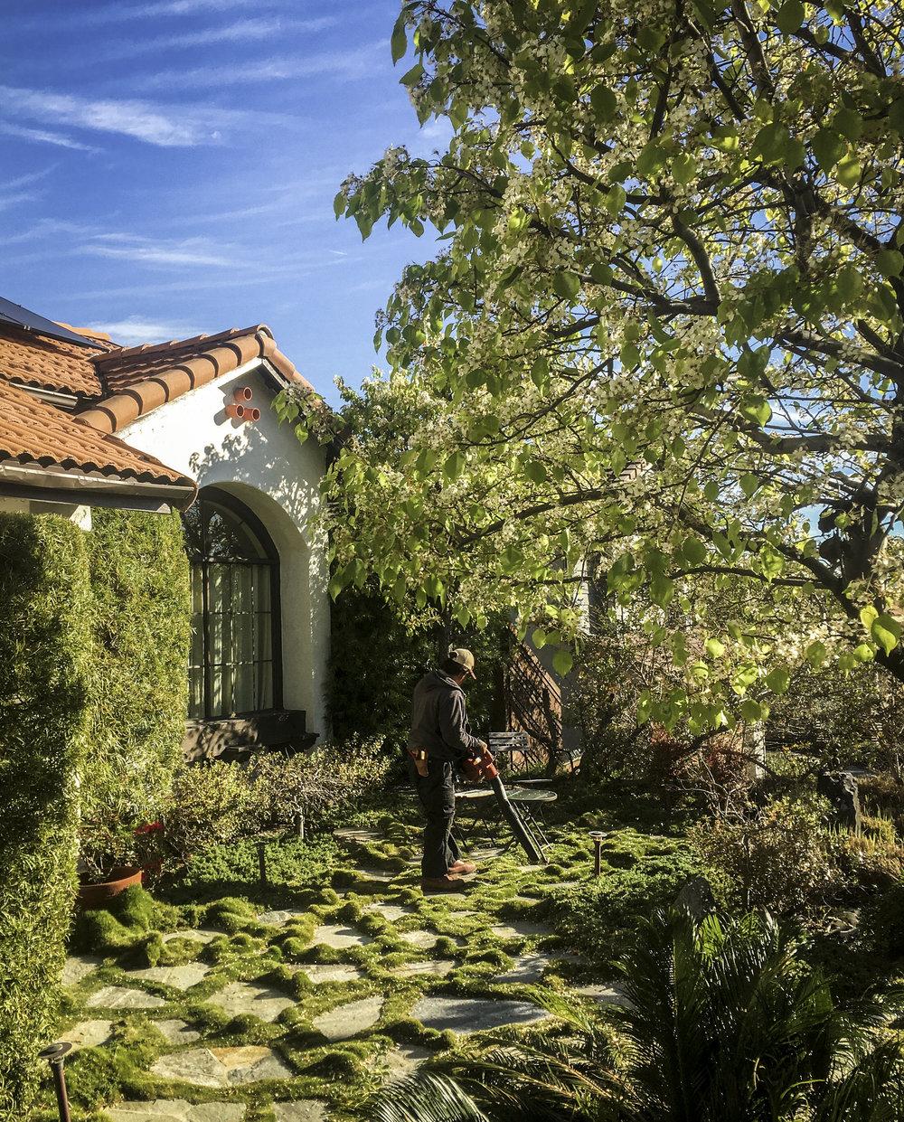 california_garden_roberto_flores_buck_11.jpg