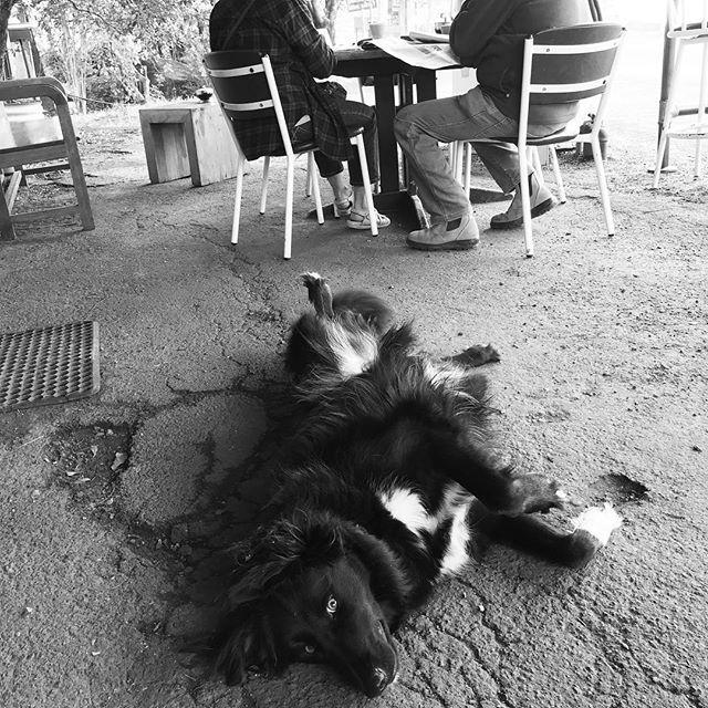 #dogsarethebestpeople #dangerbirdcoffee #specialtycoffee #coffee #cafe #wholesalecoffee #fairtrade