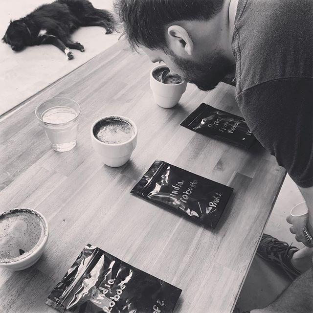 #cupping #dangerbirdcoffee #dangerbird #coffee #dogsofinstagram #specialtycoffee #cafe #loring #acaibrothers #sunshinecoastcoffee