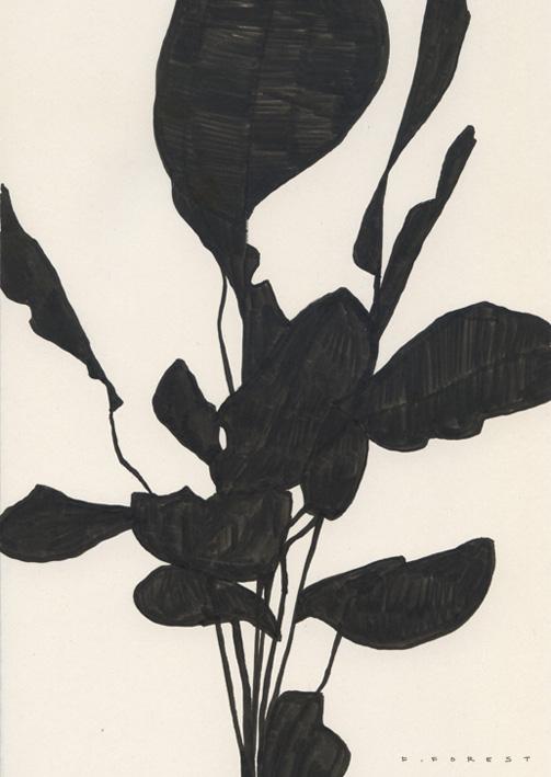 FForest_Drawing_Plant#23.jpg