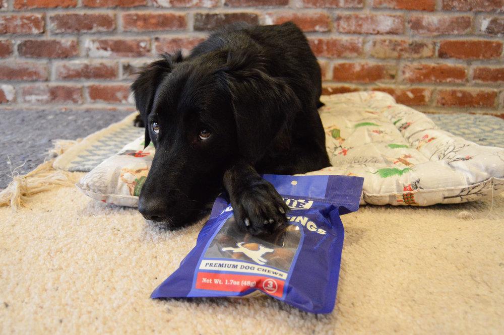 850143-@orphan.annie.dog-testimonialphoto-1217.jpg