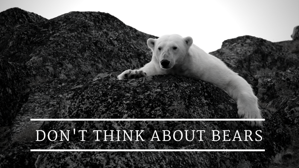 Dont_Think_About_bears (1).png