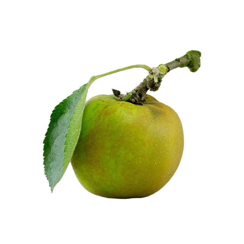 ashmeads-kernel.jpg