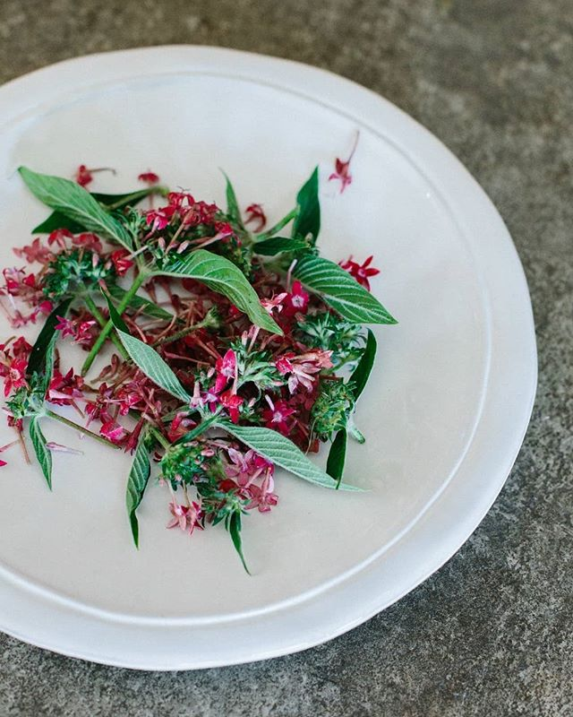 When @kalicebrun goes wild in the kitchen! 🌿⚘🍃 Taste the edible flowers of the riviera at the next edition of Secret Garden Supper Club (link in bio)  Photo: @mayamarechal