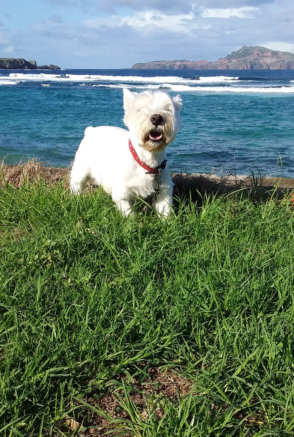 Old Monty enjoying mornings by the sea, Kingston, Norfolk Island