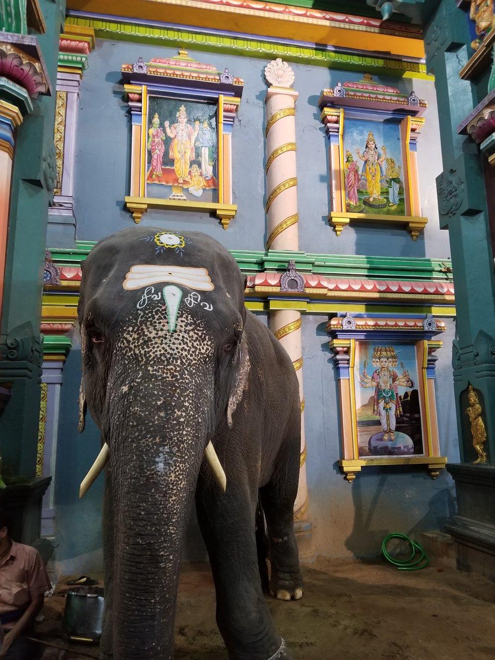 Lakshmi @ Manakula Vinayagar Temple dedicated to Ganesha